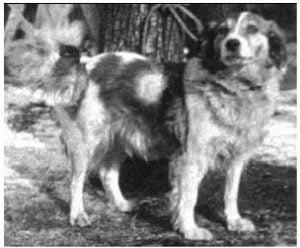 Pavlov'un Köpeğinin Cinsi Neydi? 3