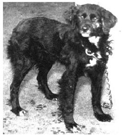 Pavlov'un Köpeğinin Cinsi Neydi? 6