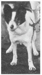 Pavlov'un Köpeğinin Cinsi Neydi? 7