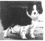 Pavlov'un Köpeğinin Cinsi Neydi? 8
