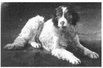 Pavlov'un Köpeğinin Cinsi Neydi? 9