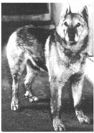 Pavlov'un Köpeğinin Cinsi Neydi? 10