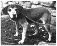 Pavlov'un Köpeğinin Cinsi Neydi? 11